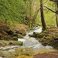gdzie strumyk płynie z wolna #las #woda #przyroda