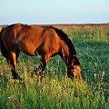 #koń #suwalki