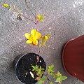 co to za roslina? #rośliny