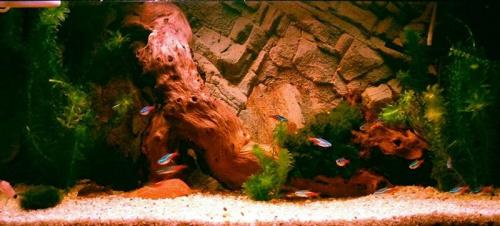 krok 2 #akwarium #amazonka #biotop #natura #OliwierReszczyński