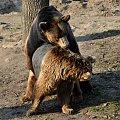 #jeż #małpa #niedźwiedź #przyroda #ptaki #zwierzęta