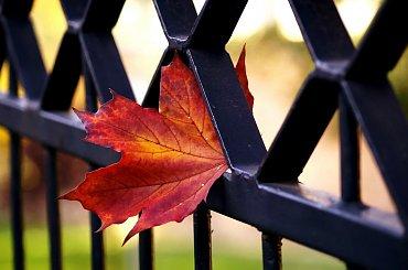 Jesienny liść #jesień #liść #przyroda