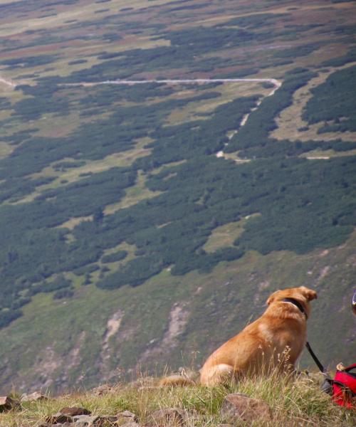 pies nad przepaścią #pies #przepaść