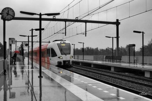 deszczowe popołudnie w Westervoort #holandia