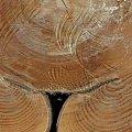 NATURA CZŁOWIEKOM ... 2 #przyroda #drewno #CZARNYRYCERZ
