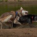 jak to psy, żrą się, ale nie ma porównania z człowiekiem... #walka #niby #zęby #zabawa