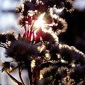 #łąka #słońce