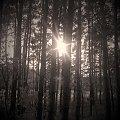 Światło. #światło #las #drzewa #słońce