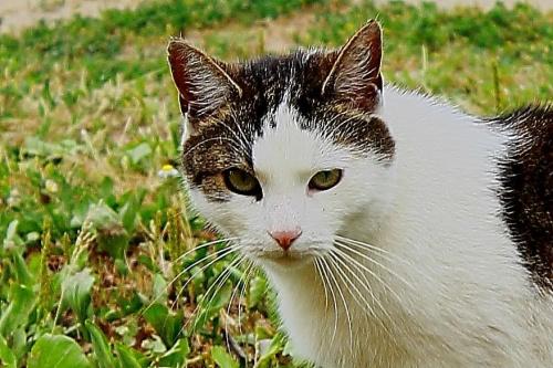 Nasza Kicia.... #kociaki #kot #koty