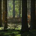 las w promieniach wiosennego słońca #wiosna #las #promienie #słońce #polana #poranek #świt #natura #przyroda #fotografia #fotosik #fotmart #WMoimObiektywie #wojtekwrzesien #dzikapolska #zieleń