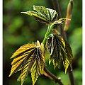 #Roślina #drzewko #liść #zielony