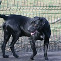 #psy #pies #adopcja