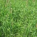 #trawy